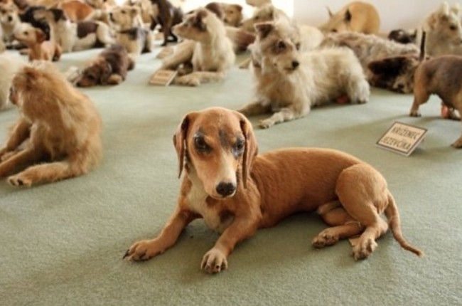 Замок Битов: самая большая коллекция чучел собак (Чехия)