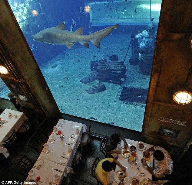 """Ресторан Cargo Hold, что переводится как """"Трюм"""", создан в копии легендарного корабля-призрака Phantom и расположен в Дурбане. Кроме самого заведения, на корабле нашлось место для гигантского аквариума, в котором плавают морские хищники. В то время, как посетители поедают устрицы и морепродукты в прохладном темном интерьере судна, за стеклом медленно проплывает акула, которая не прочь пообедать самими посетителями.  По задумке создателей, корабль, в котором находится помещение ресторана, потерпел крушение. Для того, чтобы придать большей реалистичности этой идее, основной аквариум находится ниже лодки и только часть водного аттракциона проходит сквозь зал ресторана. Корабль, несомненно, воскрешает легенды о «Летучих Голландцах», проходивших у берегов Южной Африки.  По преданию, в начале прошлого века Phantom проходил неподалеку гавани в Дурбане. Он приблизился с южной стороны, обогнул мыс Блаф, но не вошел в гавань, а повернул в открытое море. Phantom шел без флагов и не отвечал на сигналы, на палубе горел только один сине-зеленый фонарь. Он вообще не подавал признаков жизни, однако через несколько дней его видели еще раз, причем ближе к берегу. Тайна корабля-призрака так и осталась неразгаданной, по одной версии, он выполнял секретную миссию, по другой – его покинула команда в шторм, но судно уцелело и с тех пор блуждает по океанам. Как бы там ни было с Phantom-ом, ресторан Cargo Hold не только придает легенде реалистичности, но и наполняет атмосферу ужина, особенно романтичного, необычными эмоциями, которые возникают при виде морского хищника. И неважно, что акула, плавающая в аквариуме, абсолютно безвредная, один ее грозный вид и ярлык рыбы-убийцы делает пребывание в «Трюме» весьма и весьма экзотичным."""