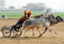 Спортивный фестиваль Кила Райпур или Сельские олимпийские игры (Индия)