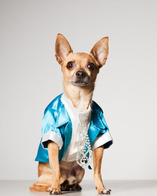 Модные собаки Нью-Йорка от Поля Натана (США)