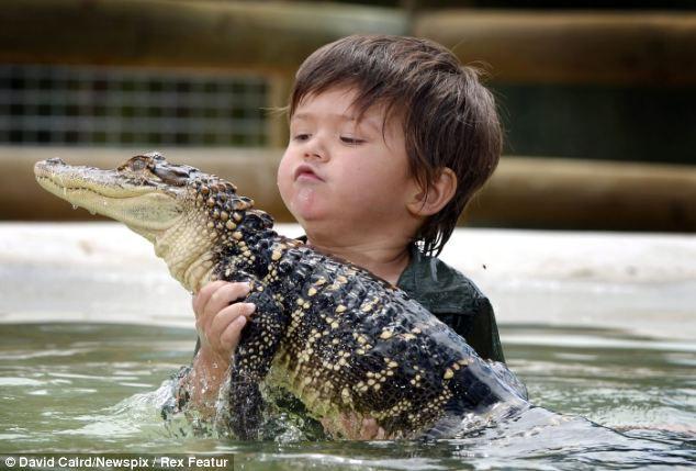 Одной этой фотографии достаточно, чтобы заставить вздрогнуть самых бесстрашных любителей животных.  На них показано, как трехлетний мальчик по имени Чарли Паркер уверенно плавает с аллигатором Гампом, поднимая его вверх, а затем в борьбе прижимает его к берегу.  Отважный ребенок утверждает, что он самый юный рейнджер Австралии, и его уже можно считать экспертом по рептилиям. Отец Чарли, который изображен улыбающимся на фотографии на заднем плане, является одним из владельцев парка Ballarat Wildlife Park в штате Виктория.  Хотя подавляющее большинство родителей стремятся защитить своих детей от любой опасности, Чарли почти с пеленок играет с удавами, змеями и крокодилами. Гордый отец Чарли говорит, что все мужчины последних трех поколений их рода занимались дрессировкой животных и уходом за ними, поэтому их сын вырос в соответствующей атмосфере: «Мы ничего не делали, чтобы поощрять его общение с животными, тем более с аллигаторами, но он просто любит рептилий. Как и все дети, он все же кое-чего боится, но гораздо меньше, чем его сверстники».