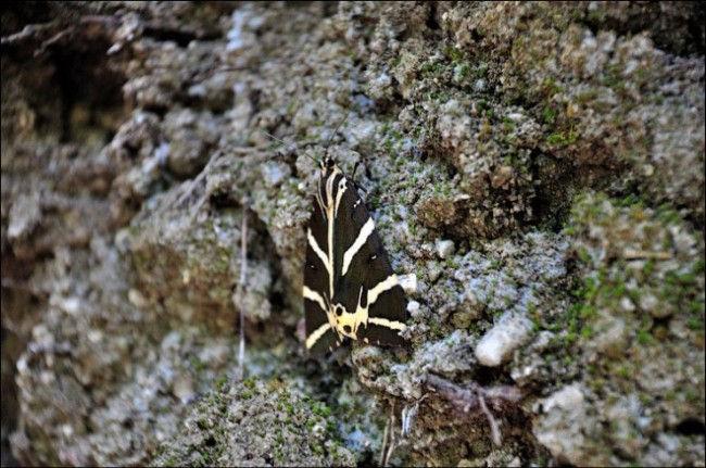 Петалудес: Долина бабочек (Греция)