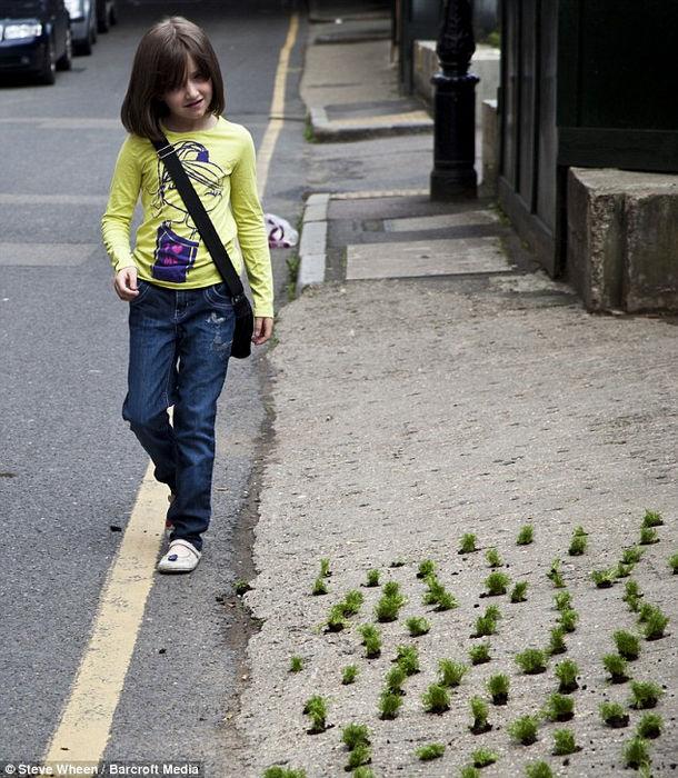 Миниатюрные цветочные поляны от Стива Уина (Англия)