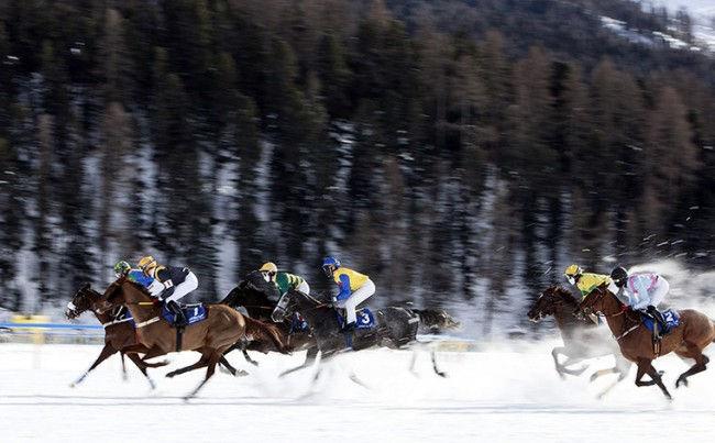 Скачки на льду в Санкт-Морице 2013 (Швейцария)