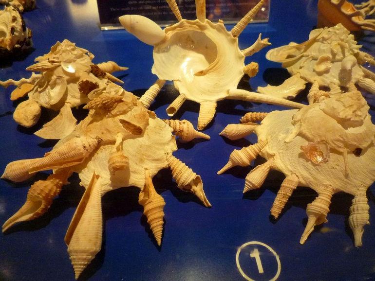 Музей морских раковин в Пхукете Таиланд