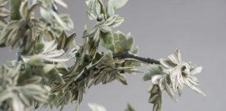 Долларовые драгоценности от Лорен Ванессы Тикли
