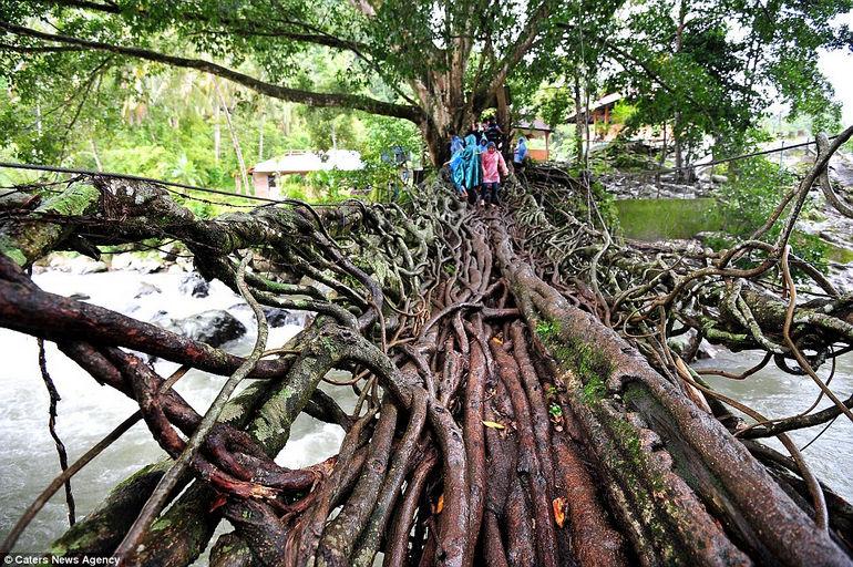 Джембатан Акар: священный живой мост (Индонезия)