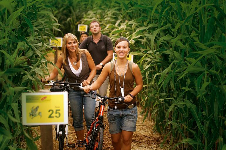 отель в кукурузном поле