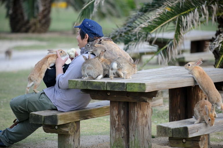 """Окуносима: остров """"ядовитых"""" кроликов (Япония)"""