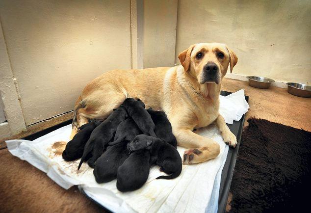 twelve puppies004.jpg