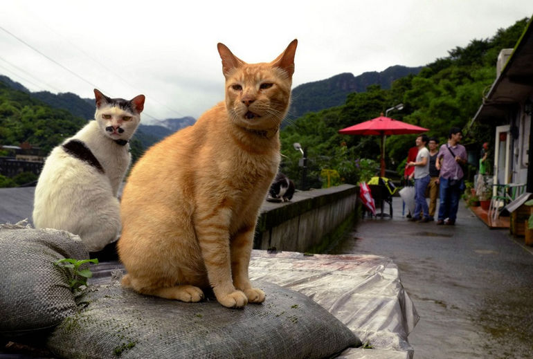 Кошачий городок Хоутонг в Тайване