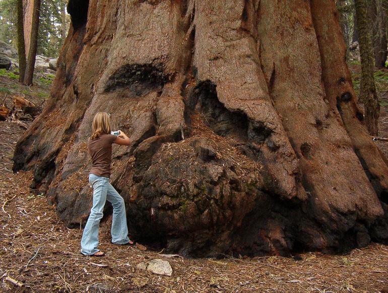 treeservicecharlestonsc-generalsherman