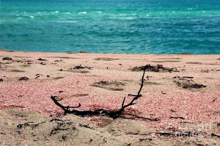 1-pink-sand-beach-sophie-vigneault
