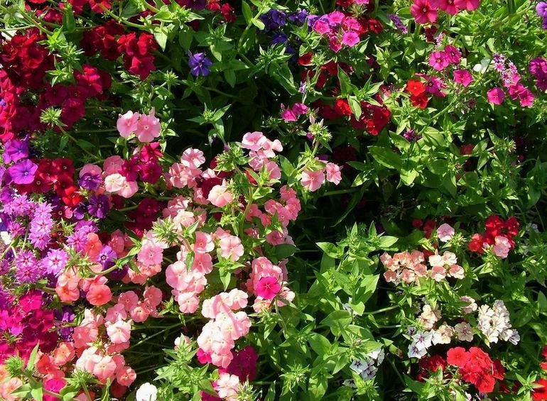 flowers-on-the-sunny-day_tbilisi.gov.ge_1334066317