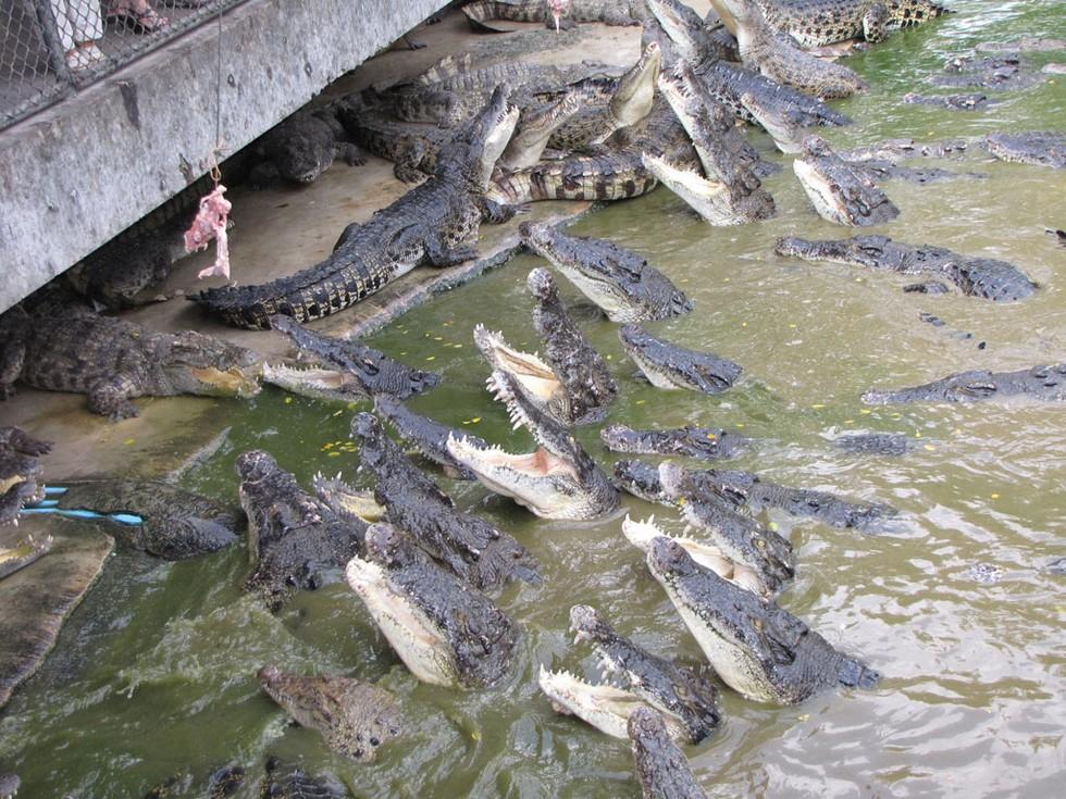 Крокодиловая-ферма