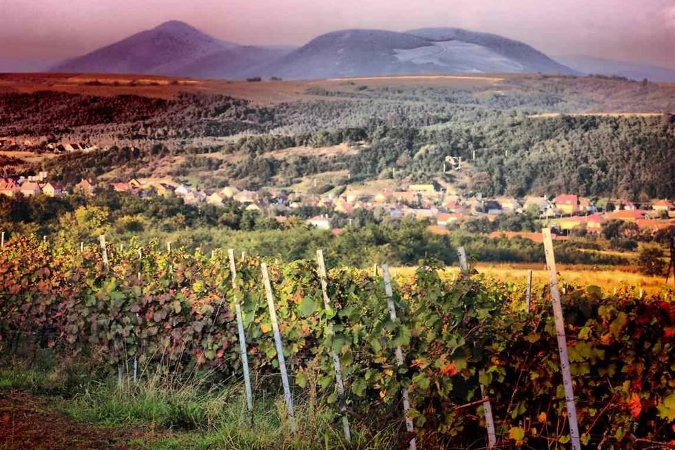 Егер-виноградники