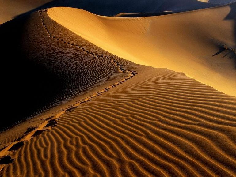 1352199948_1352197719_footprints_namib_desert_namibia_africa
