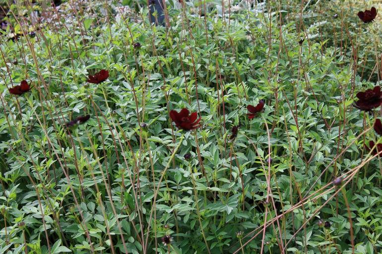 jackdaws plants 015