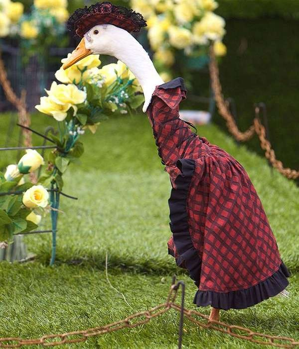 https://terra-z.com/wp-content/uploads/2013/10/pied-piper-duck-fashion-show.jpeg