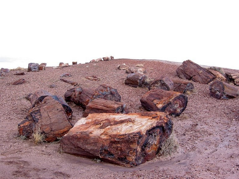 1271430708_06_petrified_forest
