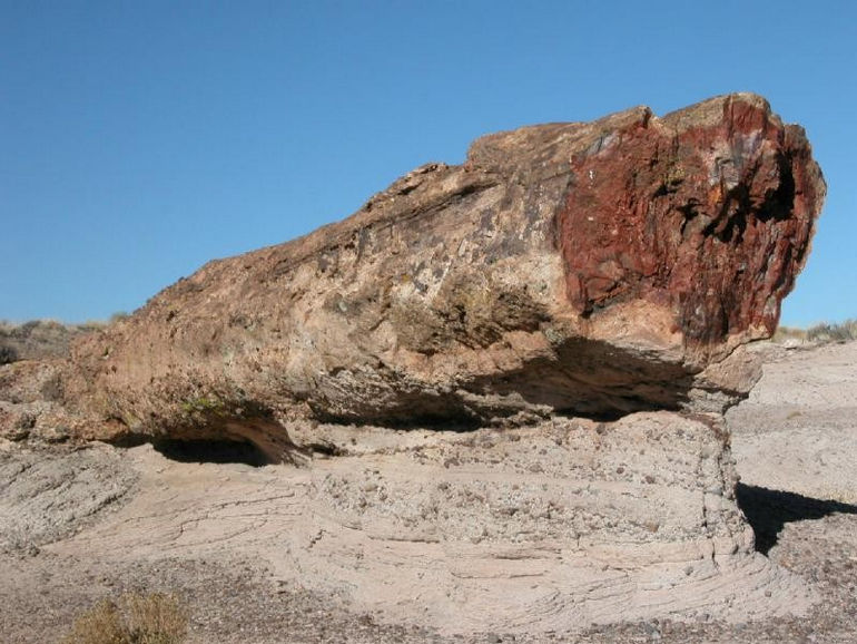 1271430750_23_petrified_forest