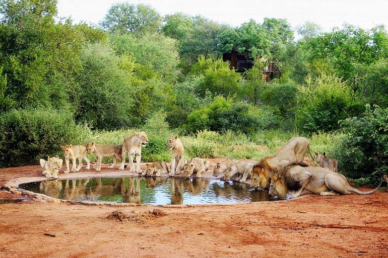1354621900_south-africa-kruger-national-park-by-april-killingsworth-1024x682