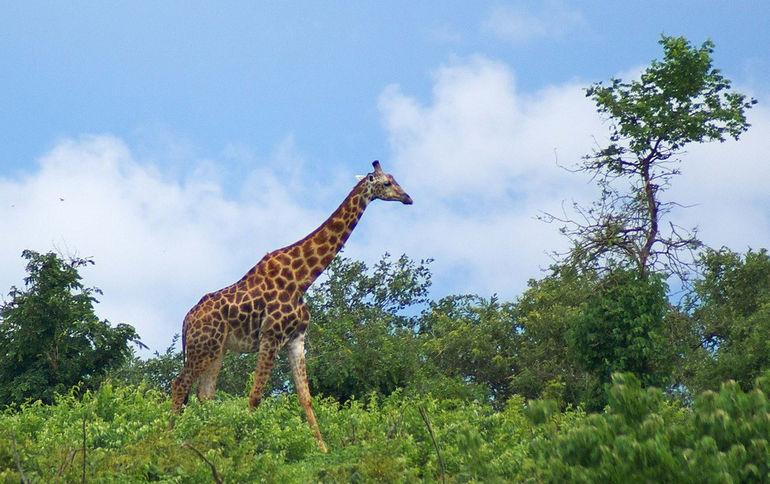 Botswana_Park_Chobe_24