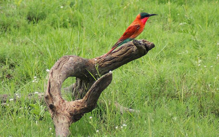 Botswana_Park_Chobe_32