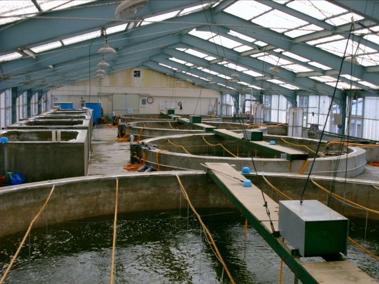 Shrimp_hatchery
