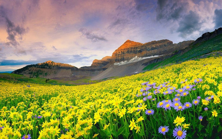 beautiful-mountain-valley-of-flowers