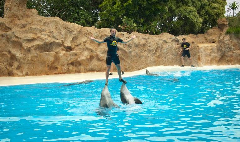 loro-park-tenerife-shou-delfinov-potrjasajushe1
