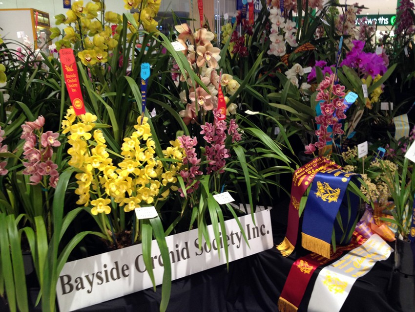 melbourne-orchid-fair-event-flowers-victoria1