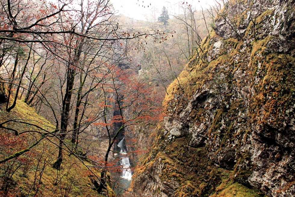 Škocjan_Caves_-_Dolima_-_Plants_and_Timavo_River