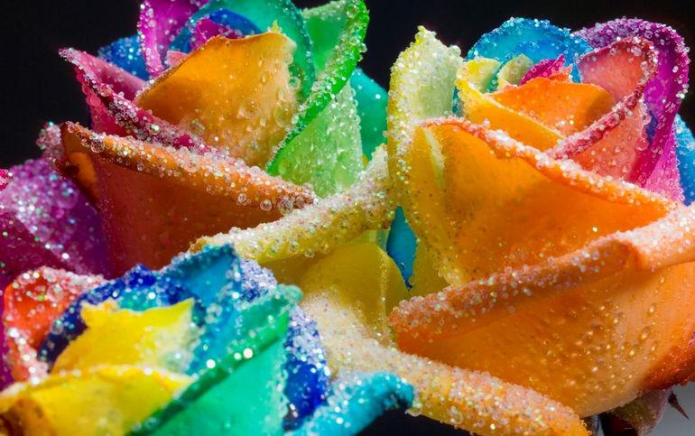 Happy_Roses_Rainbow_Glitter_by_HappyRoses