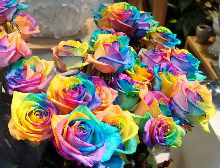 Special-Colorful-Rainbow-Rose-Flowers1