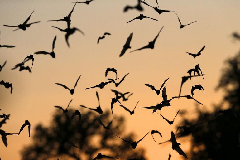 bracken-bats-jw007