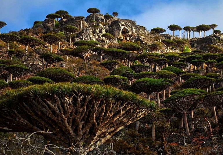 Затерянный мир архипелага Сокотра (Йемен)