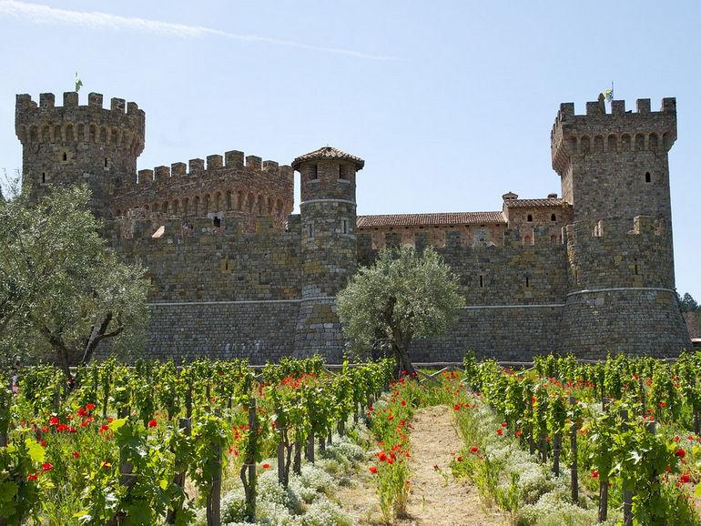 kastello_di_amorosa_vinogradnik