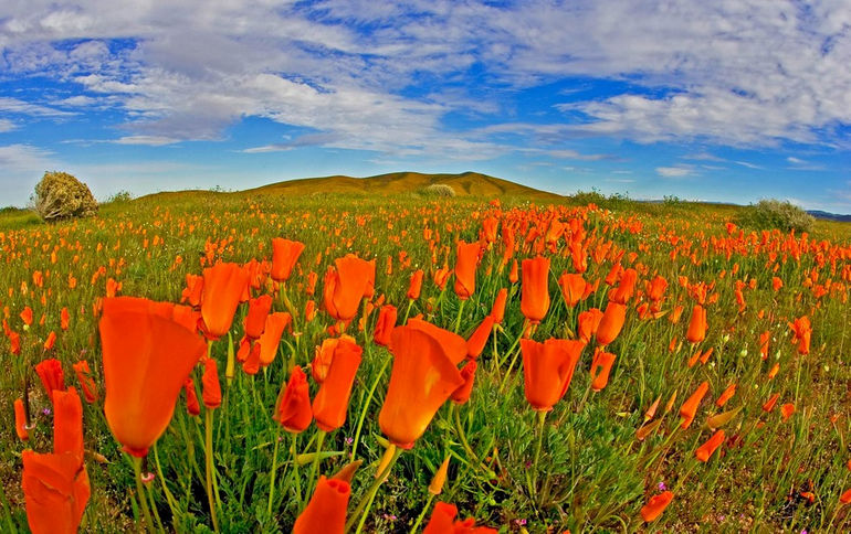 poppy-preserve-antelope-valley-california-3