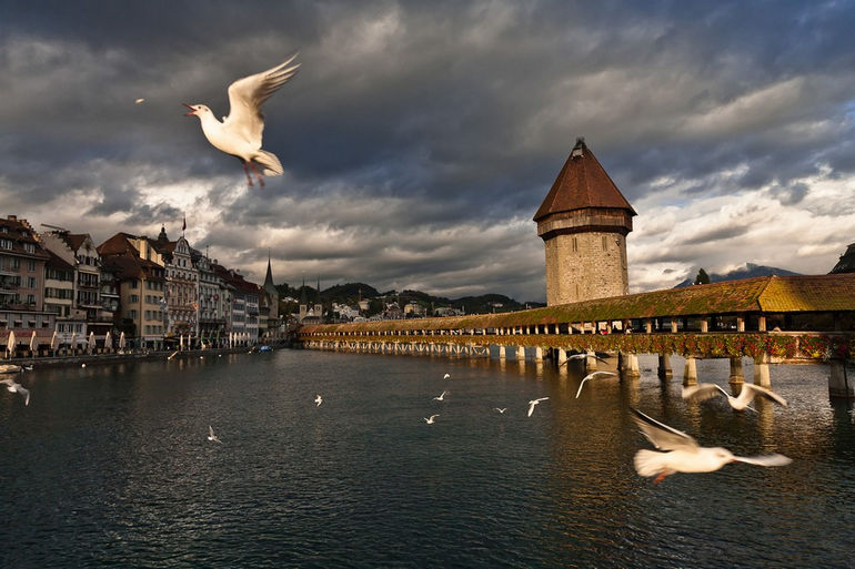 191110_Lucerne_Kapellbrucke_Chapel_Bridge_lake_pigeon_485-2