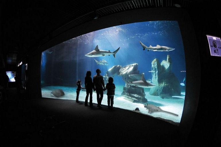 Gli-squali