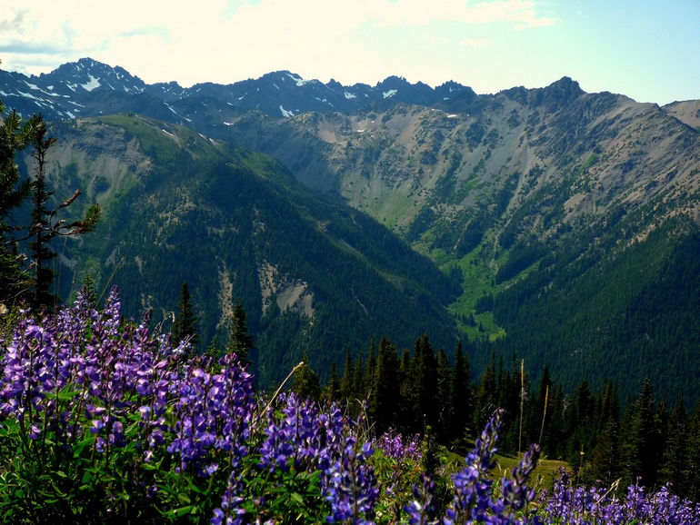 Marmot_Pass,_Olympic_National_Park
