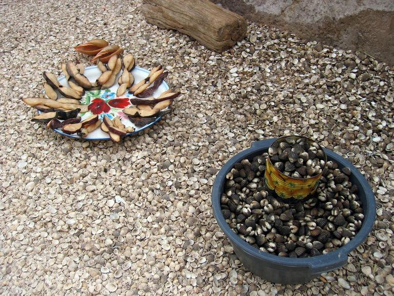 SeashellsSenegal