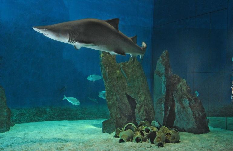 acquario-di-genova-vasca-squali