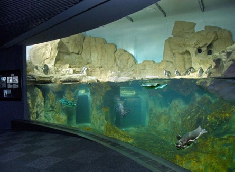 acquario-di-genova_58987