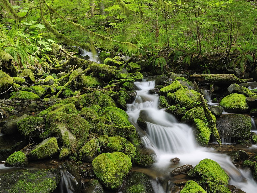 sol_duc_river__olympic_national_park__washington