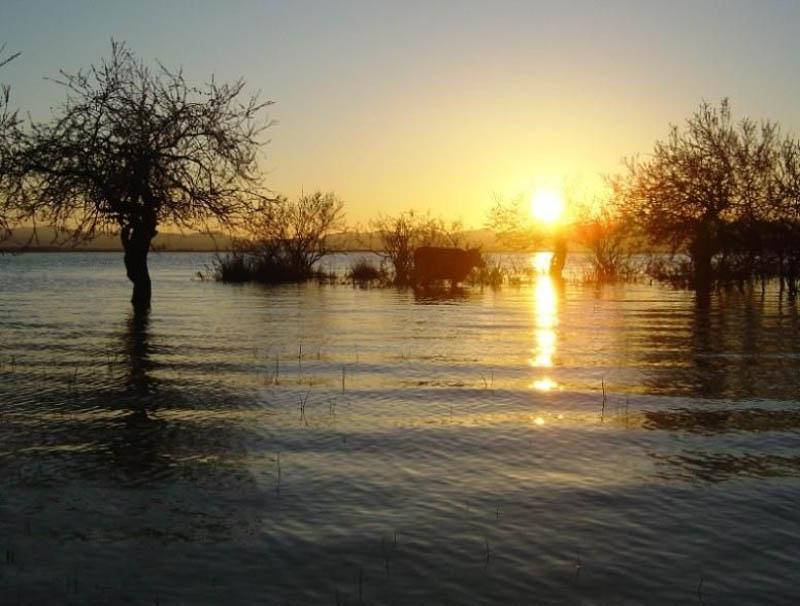 Ишкель-буйвол-в-озере