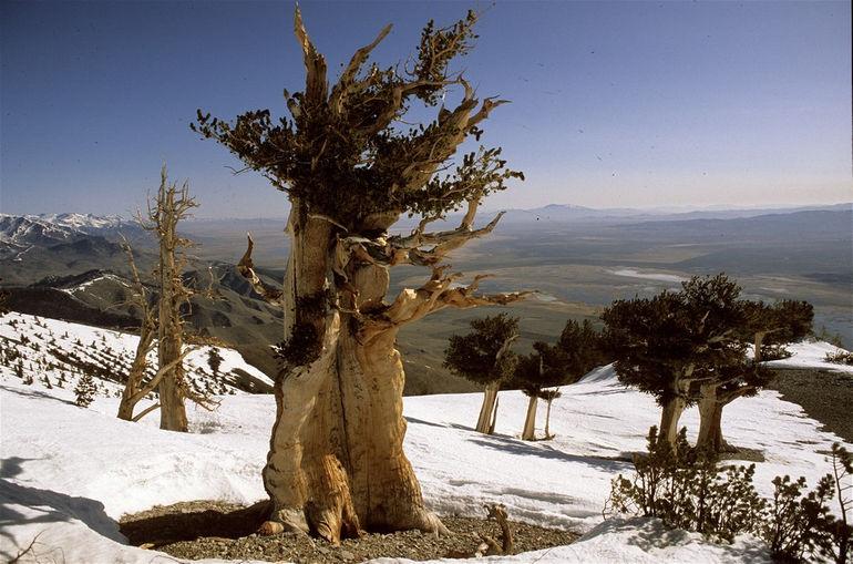 21-Amazing-Trees1