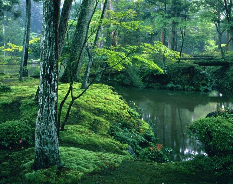 Сад мхов (Япония)