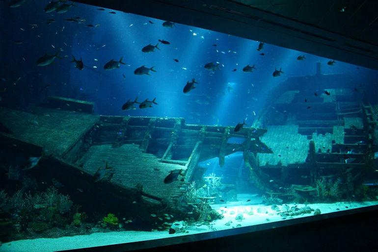 Океанариум S.E.A Aquarium (Сингапур)